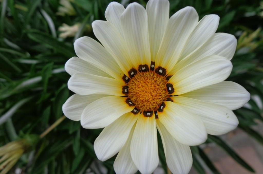 Flores da Ilha