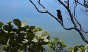 Pássaros no Vale