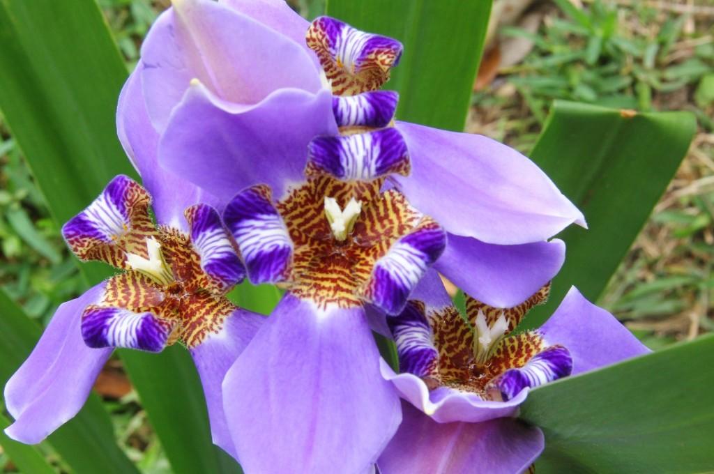 Flores na Ilha de Mato
